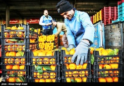 مدير عامل سازمان ميادين اهواز : میدان میوه و تره بار الغدیر  جولانگاه دلالان شده بود