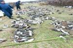 يك فعال محیط زیست خوزستاني : پرندگان مهاجر در تالاب بامدژ سلاخی میشوند